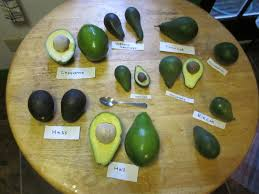 Know Your Avocado Varieties And When Theyre In Season