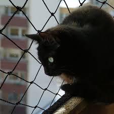 Schutznetz Für Katzen Netz Für Katzen Sicherheit Amp Schutz