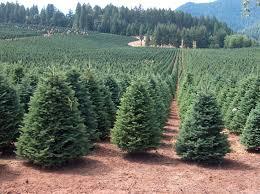Christmas Tree Farms Near Me | Fishwolfeboro regarding Christmas Tree Farms  Near Me 1110