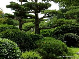 Japanese Garden Plants Latest Plants For Japanese Garden Uk For Japanese 1024x768