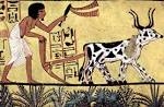 new Kingdom Egypt Agriculture