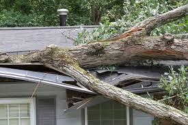 My Neighbor\u0027s Tree Fell on My House! Who Pays? - Michael L Davis ...