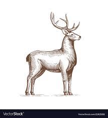 A Deer Drawing By Hand In Vintage