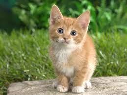 Orange Kitten Wallpapers - Top Free ...