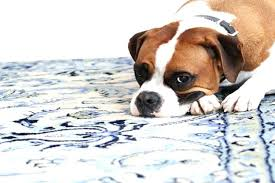 best area rugs for owners best area rugs for pets pet friendly large size of