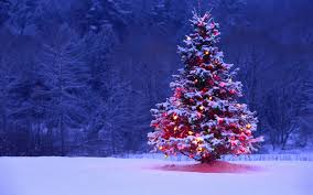 christmas trees decorated outside snow.  Decorated To Christmas Trees Decorated Outside Snow T