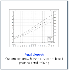 Antenatal Growth Chart Centile Lines Fetal Growth