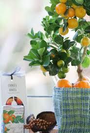SemiDwarf Fruit Trees Vs UltraDwarf  Home Guides  SF GateDwarf Fruit Trees Virginia