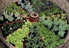 veg garden impressive small veg garden ideas best ideas about small vegetable gardens on vegetable garden veg garden