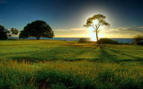 green grass field animated. Field Illuminated Ocean Tree Sea Trees Sky Grass Sun Best Wallpapers Green Animated