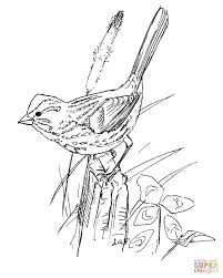 Song Sparrow Bird Coloring Page Free Printable Coloring Pages