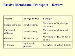 Venn Diagram Of Diffusion Osmosis And Active Transport A Review Of The Passive And Active Transport In Cell