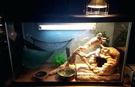 lights for bearded dragon baby bearded dragon cage setup