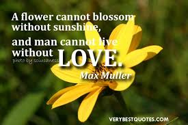 Flowers Love Quotes Delectable Quotes On Flowers And Love Prepossessing Love Quotes Images Flower