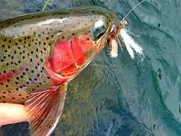 Salmon Fly Patterns Gorgeous Gorge Fly Shop Blog Salmon Fly Hatch On The Deschutes River Oregon