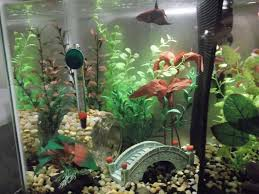 Fish Tank Accessories And Decorations A Guide To Choose The Best Fish Tank Accessories marinetank100 26
