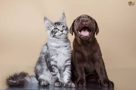 Image result for cat and dogs pictures together