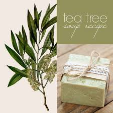 tea tree soap recipe