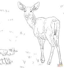 Small Picture Mule Deer Buck coloring page Free Printable Coloring Pages