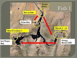 Here Fishy Fishy Lake Mead National Recreation Area