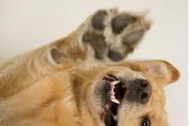 Resultado de imagen para imagenes de perros que cojean