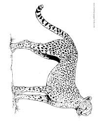 Small Picture Cheetah color page Animal coloring pages