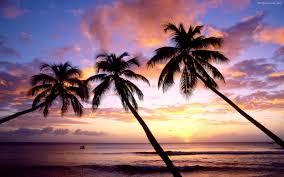 summer beach tumblr. Drawn Palm Tree Summer Beach #6 Tumblr