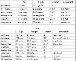 Ball Python Size Chart What Exactly Is A Rodent Again Corn Snake Bearded Dragon
