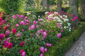 Small Picture Download Small Rose Garden Solidaria Garden