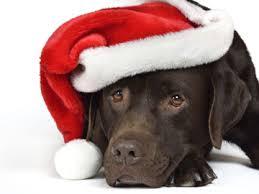Bildergebnis für weihnachtshund gif
