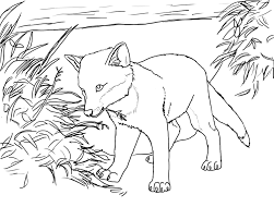 Baby Fox Coloring Pages | 224 Coloring Page