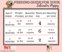 How Much To Feed A Puppy Chart Labrador Puppy Food Chart Dogs Breeds And Everything
