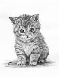 realistic cat drawing in pencil. Wonderful Pencil Coloring For Adults  Kleuren Voor Volwassenen Throughout Realistic Cat Drawing In Pencil