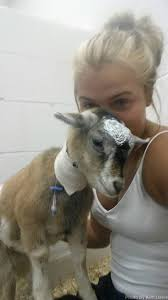 Animals of Farm Sanctuary — How One Girl's Love Opened a Whole New World  for a...