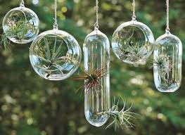 if you don t want to get your hands dirty you can always opt for this cool air plant tillandsia display we love the way the leaves protrude from the