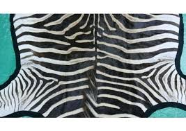 zebra skin rugs for south africa real rug 7