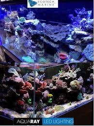 ecotech radion versus tmc aqua ray ho led aquarium lights