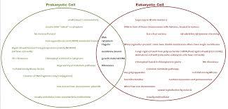 Compare Prokaryotic And Eukaryotic Cells Venn Diagram Prokaryotic Cells Vs Eukaryotic Cells Biochemnation