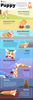 Puppy Schedule Daily Routine For New Puppies