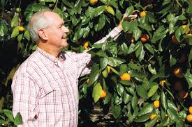 221 Best Garden Food  Florida Images On Pinterest  Fruit Plants Fruit Trees For North Florida