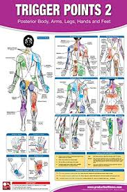 Muscle Pressure Points Chart Trigger Point Therapy Chart Poster Set Acupressure Charts Myofascial Trigger Points Massage Therapy Charts Muscle Pain Relief Posters