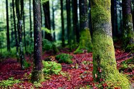 Risultati immagini per foresta