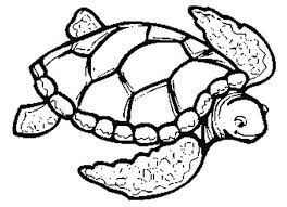 Small Picture Turtle Coloring Pages Prints And Colors 22952 Bestofcoloringcom