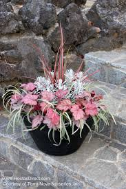 23 Best Container Gardens For Sun Images On Pinterest  Proven Container Garden Plans Flowers