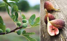 8 Fruit Trees You Can Grow Right On Your Balcony  Rodaleu0027s Dwarf Fruit Trees Virginia