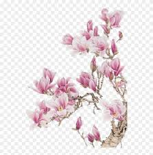 orchid romantic good morning my love