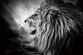 Skleněný Obraz Lev Lví Hlava V Noci