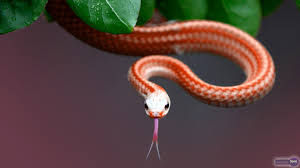 exotic snake wallpapers exotic snake images for free mtx