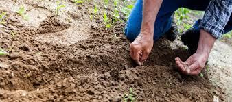 How To Fertilize Your Food Plots When You Dont Have A Soil