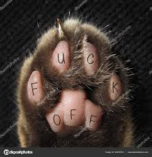 Kočičí Tlapka Tetování Stock Fotografie Iridi 144515741